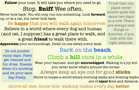 dog's manifesto for walking