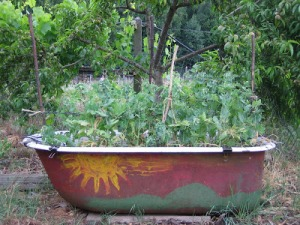 bathtub+garden