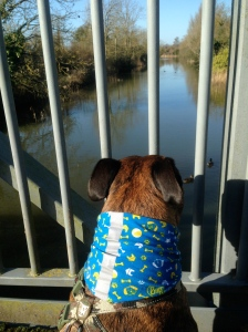 Those ducks are totally jealous of my dog buff!